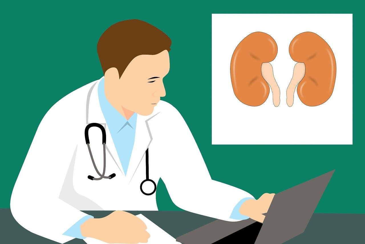 What is Renal biopsy ?